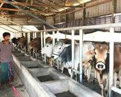 Bangladesh New Dairy Design Project