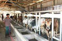 Bangladesh New Dairy Design Project