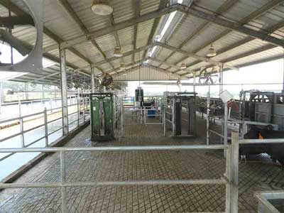 Animal Working Facilities