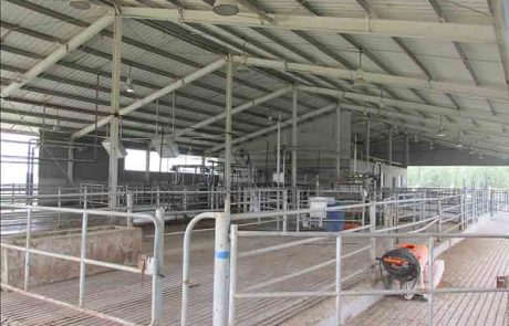 Red Star Dairy Animal Working Facility